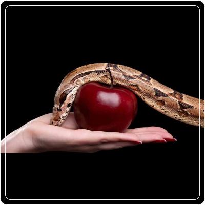 Что такое грех и каковы его последствия